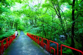 46ゆと森朝散歩s.jpg
